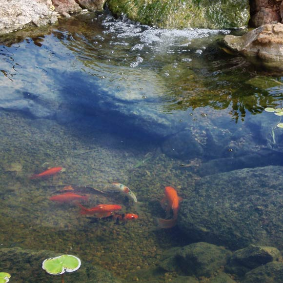 Koi pond design installation scottsdale az contractor for Koi pond installation