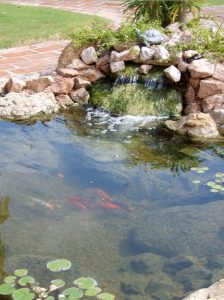 Backyard Koi Pond (2)