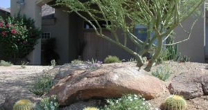 Xeriscape Landcaping Rock