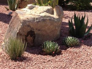 Xeriscape Landscaping Arizona